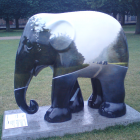 10 - Elephant Road
