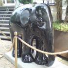 88 - Rossini the Elephant – Incognito Royale